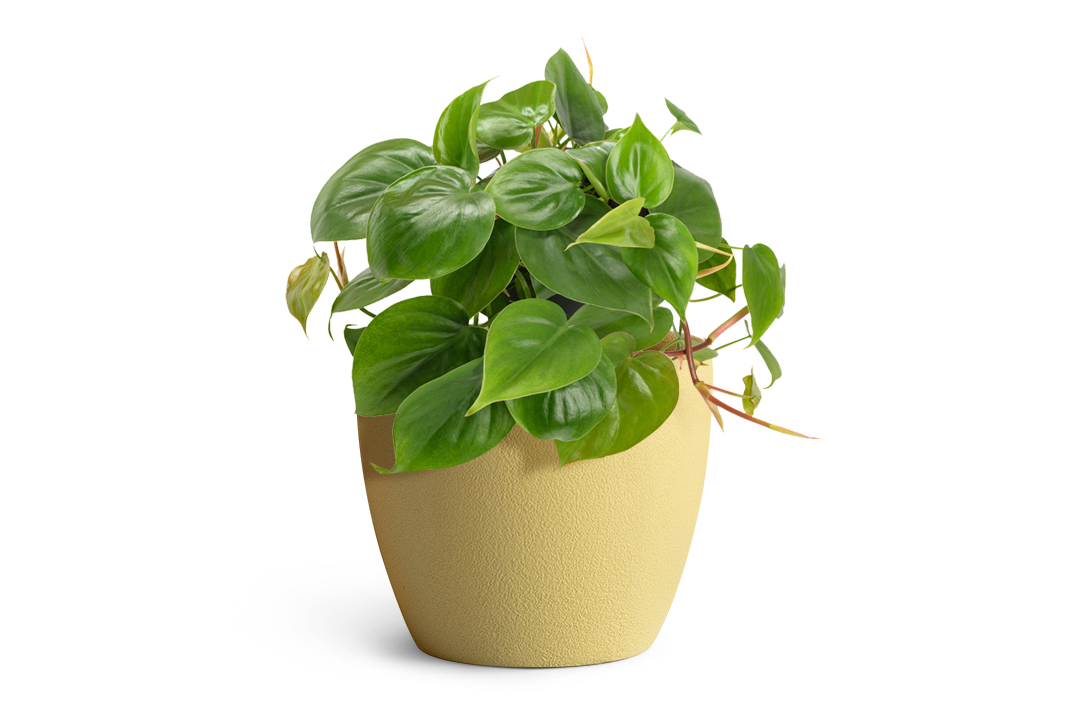 green plant planted in yellow fiberglass planter