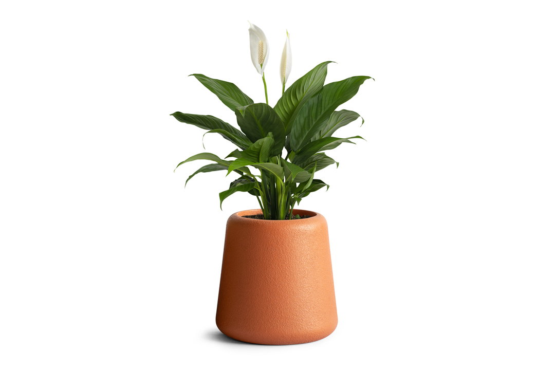 peace lily plant planted inside orange planter in rustic finish