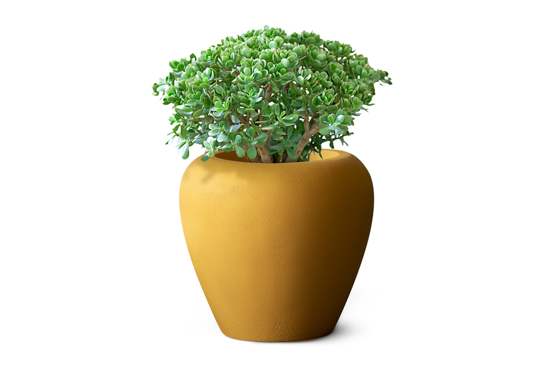 jade plant planted in orino planter made by planter manufacturers in ahmedabad