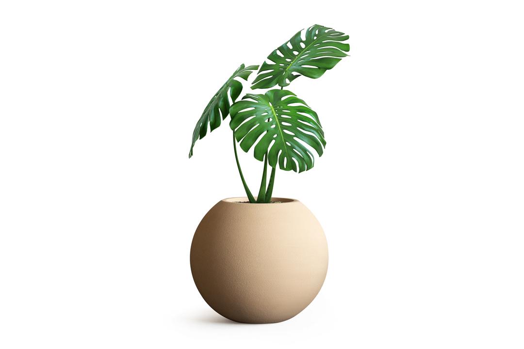 monstera plant placed insideround ovalio planter