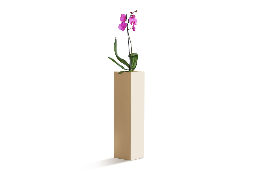 orchid plant planted in a rectangular planter